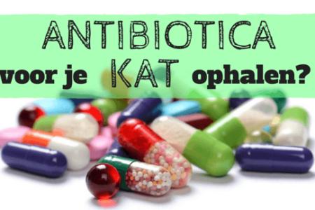 Antibiotica ophalen bij de dierenarts?