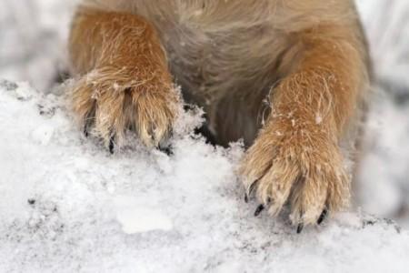 Sneeuwpret, bescherm de pootjes van uw hond!