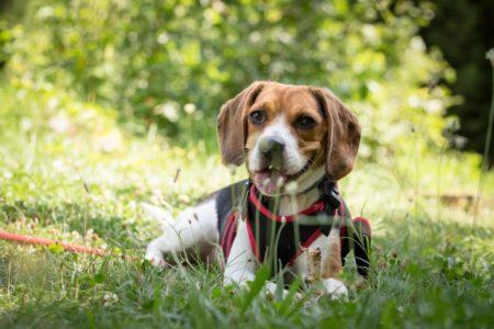 Hondenziekte duikt op: is uw hond goed gevaccineerd?
