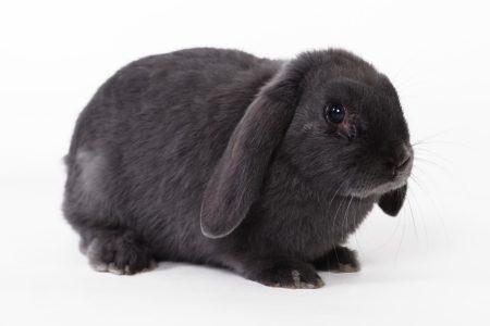 Help mijn konijn heeft maden! (Myiasis)