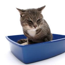 Plast uw kat in huis? of gaat hij geregeld...